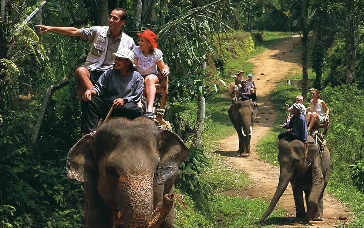Elephant Travels And Tours