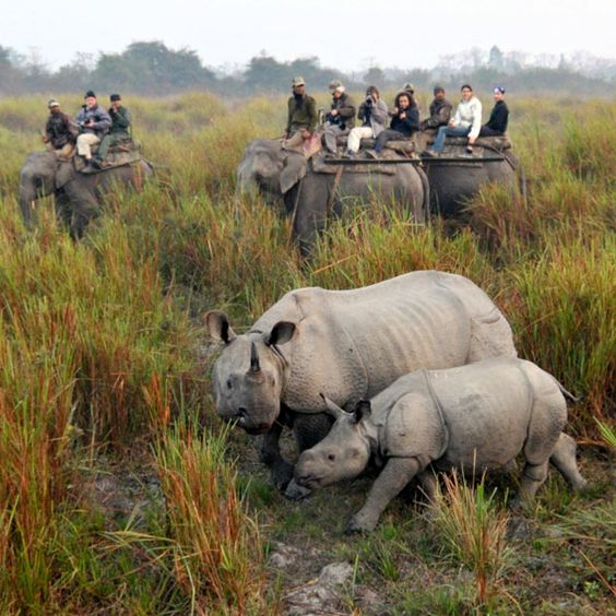 poaching of animals essays Free essays on poaching get help with your writing 1 through 30.