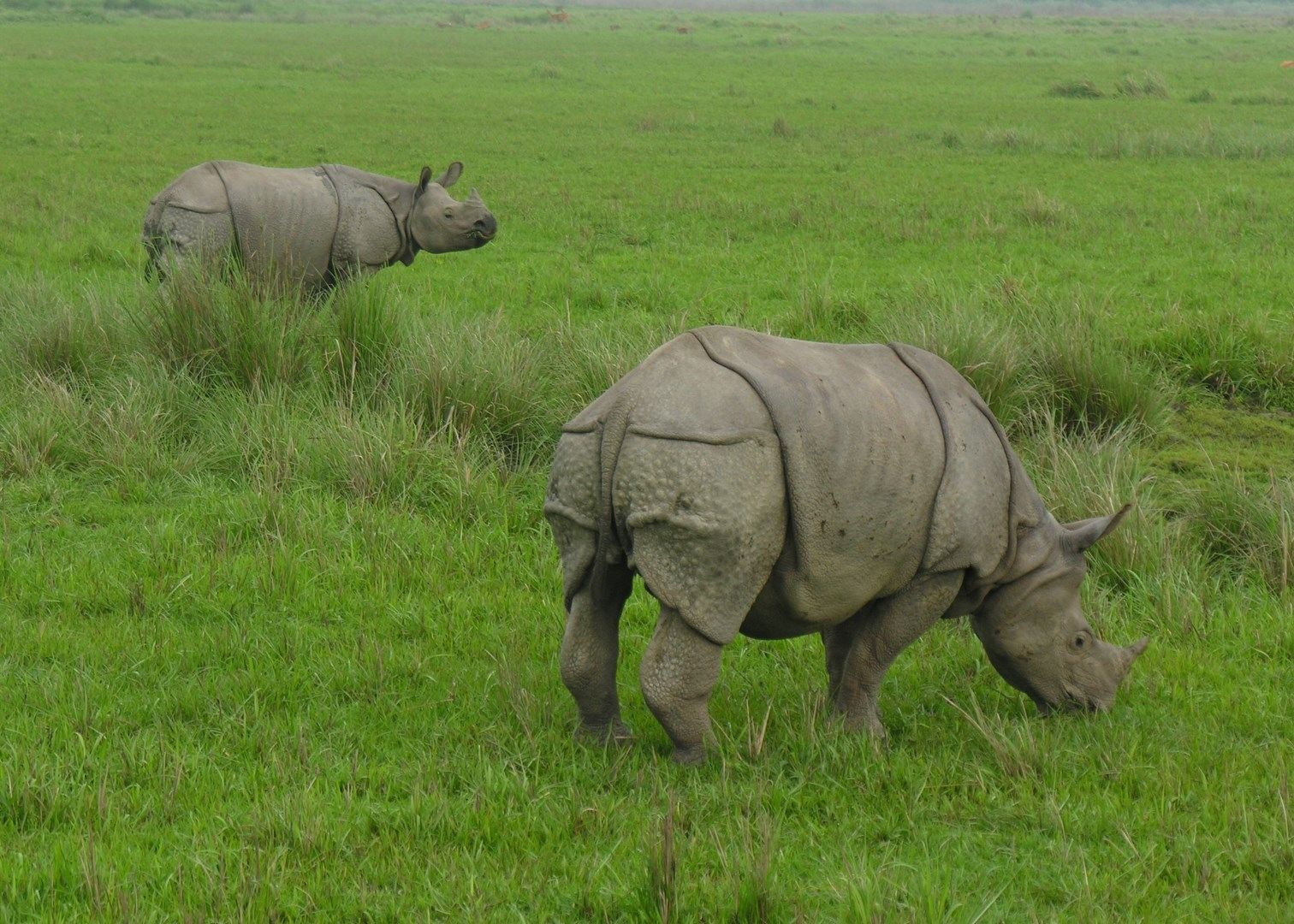 kaziranga national park Eagerly waiting to know about the famous kaziranga wildlife national park and it's history and facts kaziranga national park located on the banks of the mighty brahmaputra river in north east of india, assam the other major tourist attractions of the kaziranga and best time to visit the.