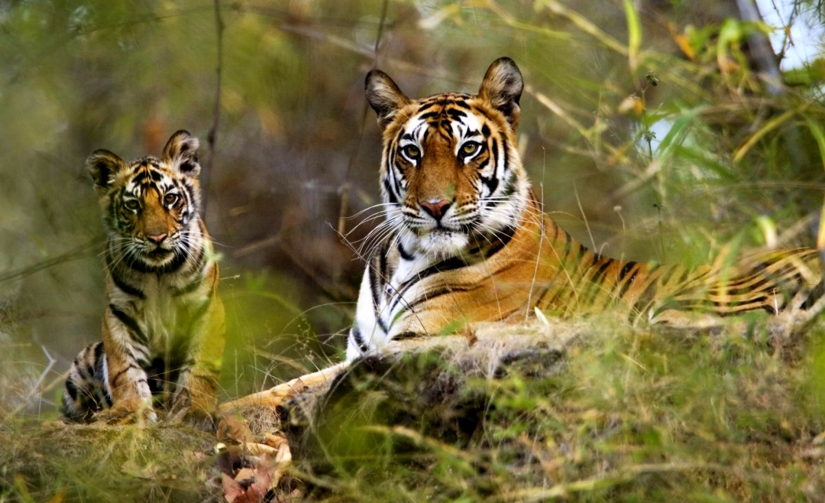 Bandhavgarh National Park Tourism and Travel Guide