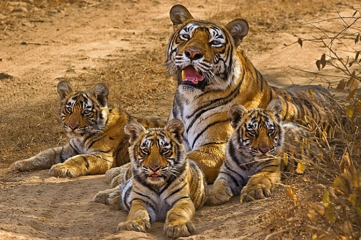 Indian Wildlife Tour Packages