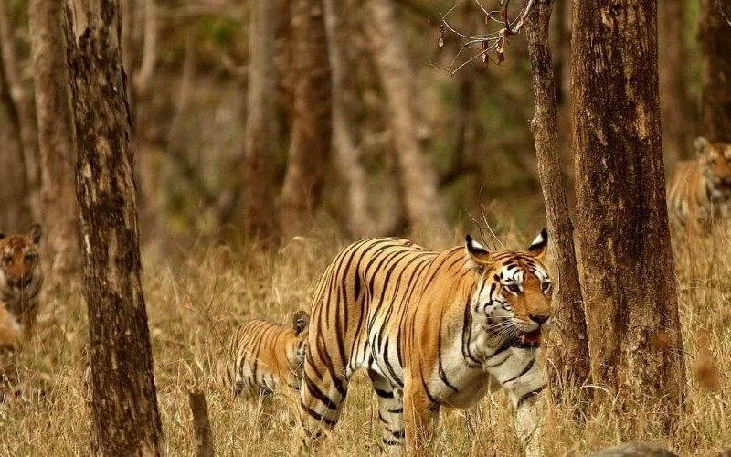 Pench Tourism and Travel Guide