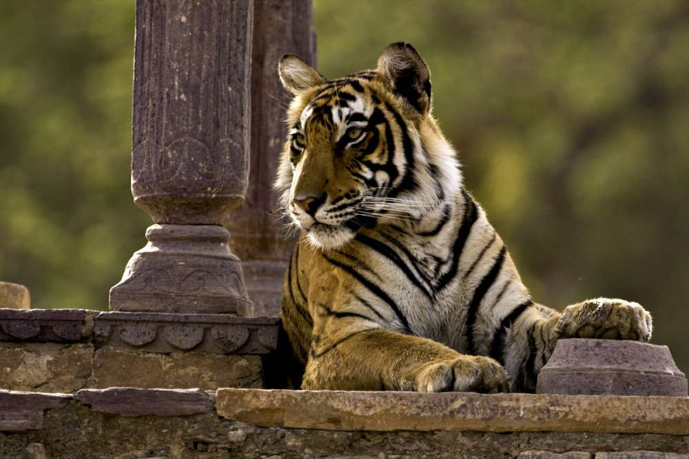 Glory Of India Tour