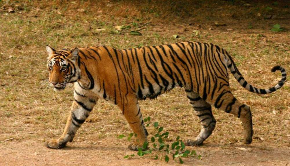 Golden Triangle With Rajasthan Wildlife Tour