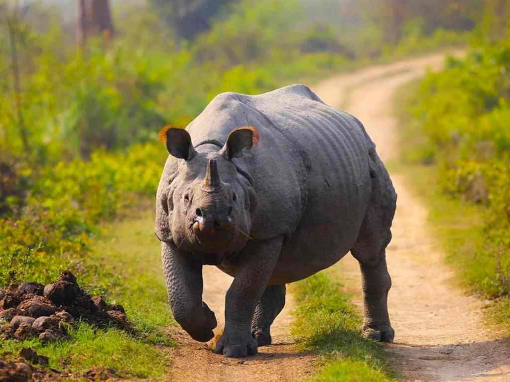 Animals to see in India